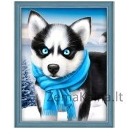 Deimantinė mozaika paveikslas - Blue Eye Husky AZ-1540