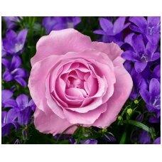 Deimantinė mozaika Gėlė WD2308