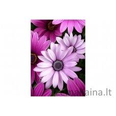 Deimantinė mozaika Gėlės WD2306