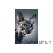 Deimantinė mozaika Katinas WD2322