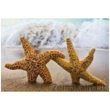 Deimantinė mozaika paveikslas 2 Sea Stars AZ-1056