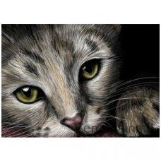 Deimantinė mozaika paveikslas - CATS EYES AZ-1184
