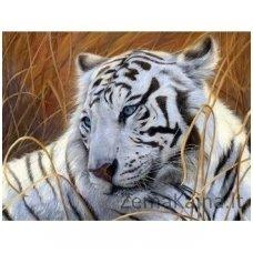 Deimantinė mozaika paveikslas - White Tiger AZ-1401