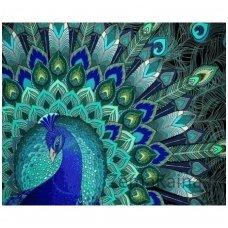 Deimantinė mozaika paveikslas - Peacock Patterns AZ-1396