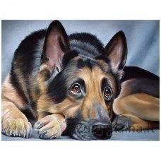 Deimantinė mozaika paveikslas - Sheepdog AZ-1418