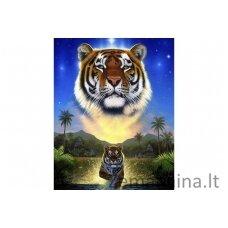 Deimantinė mozaika Tigras WD2411