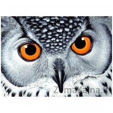 Deimantines mozaikos rinkinys - Owl's Look WD243
