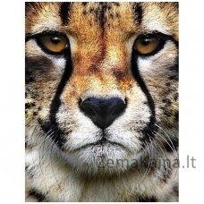Deimantines mozaikos rinkinys - Hunter's Look WD285