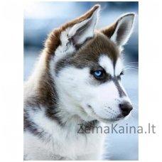 Deimantines mozaikos rinkinys - Snow Dog WD088