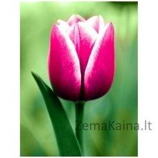 Deimantines mozaikos rinkinys - Tulip WD300