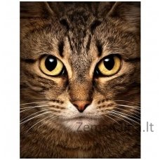 Deimantines mozaikos rinkinys - Wise Cat WD280