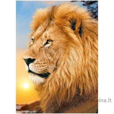 Deimantines mozaikos rinkinys - LION KING WD070