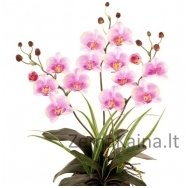Dirbtinė gėlė Orchidėja F699BAD