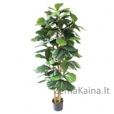Dirbtinis augalas Figa