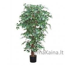 Dirbtinis augalas Fikusas IV