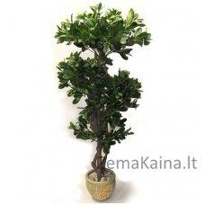 Dirbtinis augalas Lipniasėklis