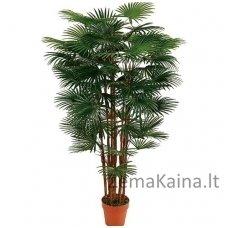 Dirbtinis augalas Rapipalmė II