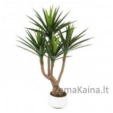 Dirbtinis augalas Dracena OSTB
