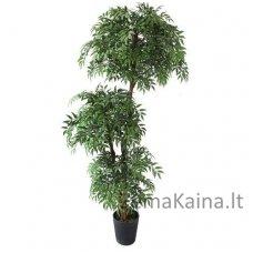Dirbtinis augalas Pelžiedė