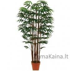 Dirbtinis augalas Rapipalmė I