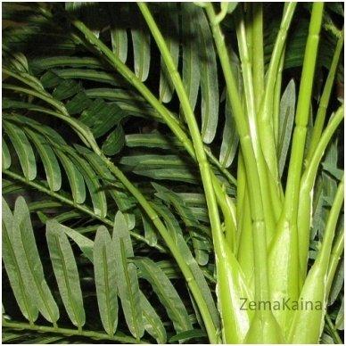 Dirbtinis augalas Palmė VI 2