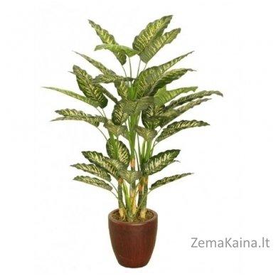 Dirbtinis augalas Difenbachija