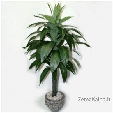 Dirbtinis augalas Dracena III