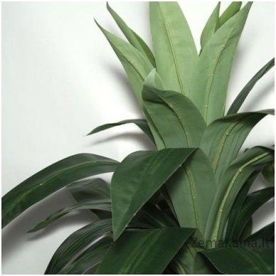 Dirbtinis augalas Dracena III 4