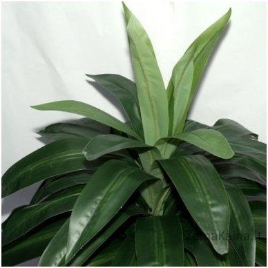 Dirbtinis augalas Dracena III 2