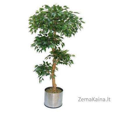 Dirbtinis augalas Fikusas I