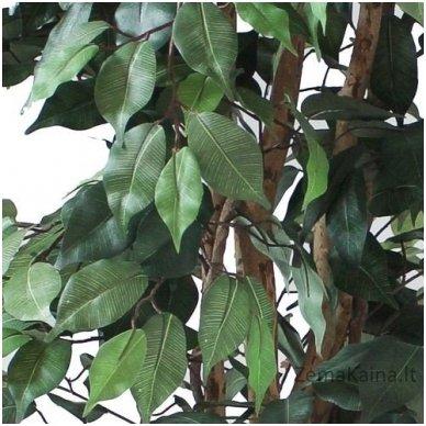 Dirbtinis augalas Fikusas V 3