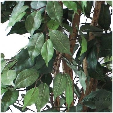 Dirbtinis augalas Fikusas VI 3
