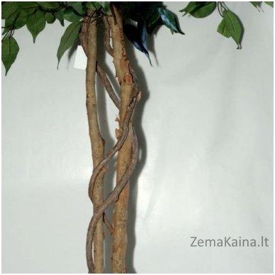 Dirbtinis augalas Fikusas VI 2