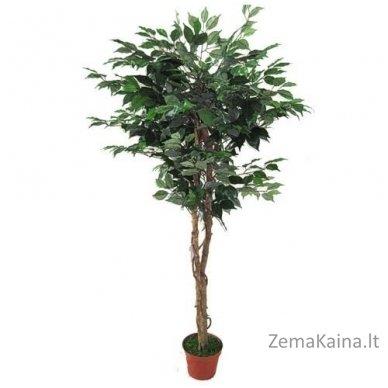Dirbtinis augalas Fikusas VI