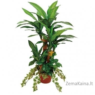 Dirbtinis augalas Dracena II