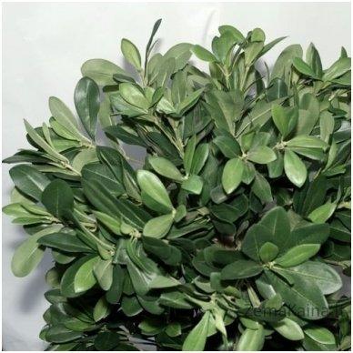 Dirbtinis augalas Lipniasėklis 3