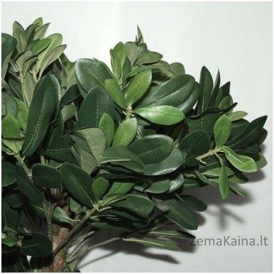 Dirbtinis augalas Lipniasėklis 2
