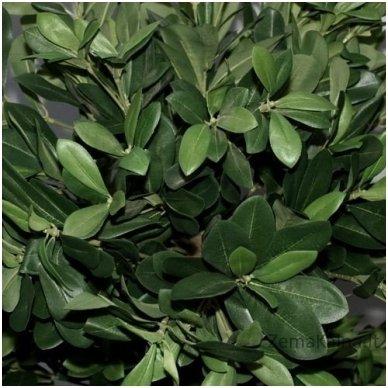Dirbtinis augalas Lipniasėklis 4