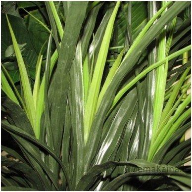 Dirbtinis augalas Dracena I 2
