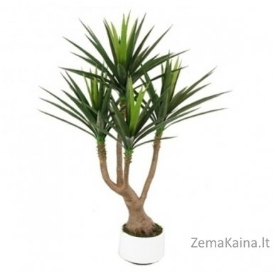 Dirbtinis augalas Dracena I