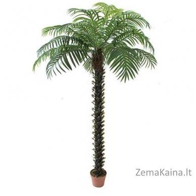 Dirbtinis augalas Palmė III