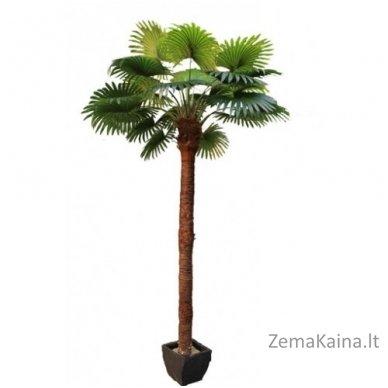 Dirbtinis augalas Palmė I