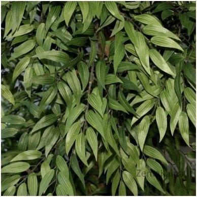 Dirbtinis augalas Pelžiedė 3