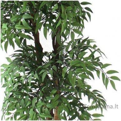 Dirbtinis augalas Pelžiedė 2