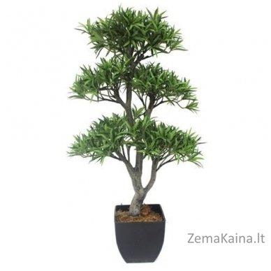 Dirbtinis augalas Podokarpas 2