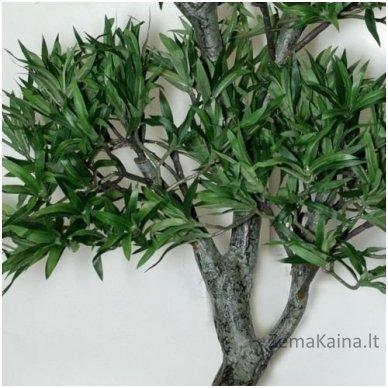 Dirbtinis augalas Podokarpas 3