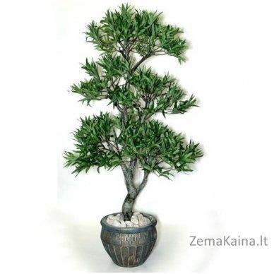 Dirbtinis augalas Podokarpas