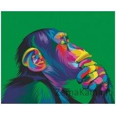Tapymas pagal skaičius: Beždžionė (50x40cm T40500018)