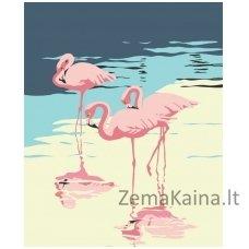 Tapymas pagal skaičius: Flamingas (50x40cm T50400035)