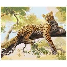 Tapymas pagal skaičius: Leopardas (40x50 cm T40500122)